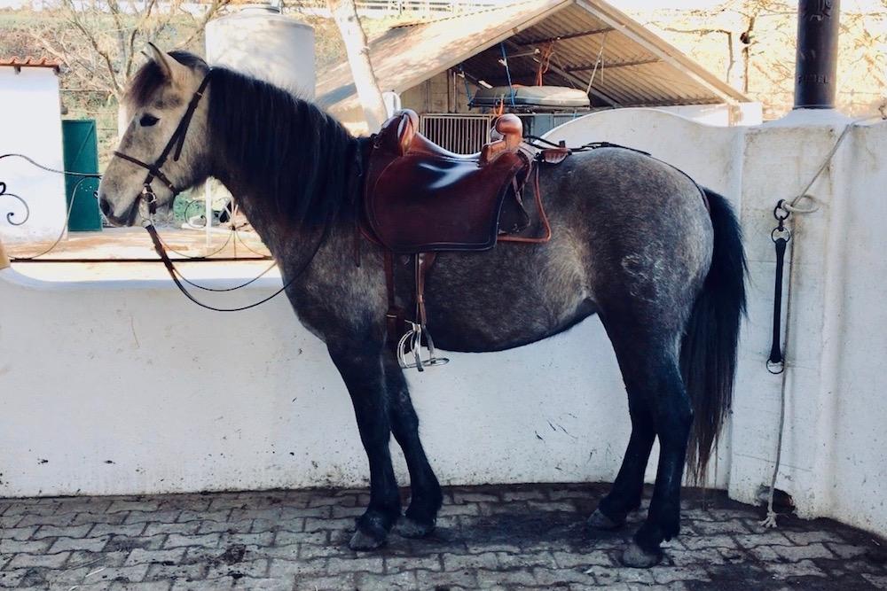 manade-puig-aurelie-chevaux-vente-delia