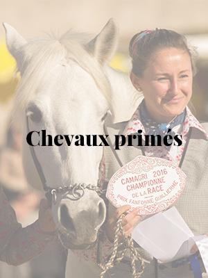 _chevaux-primes-01