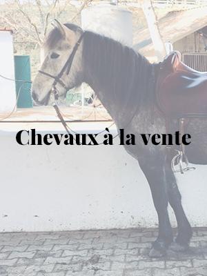 _chevaux-vente-01