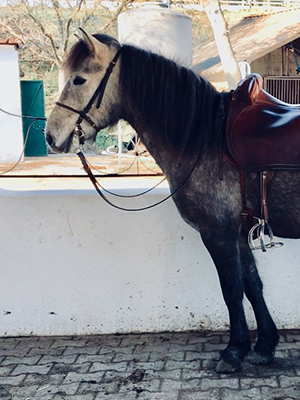 _chevaux-vente-02